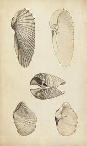 Marine Mollusk III by Wood