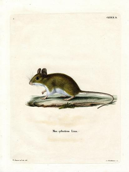 Wood Mouse--Giclee Print
