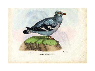 Wood Pigeon, 1863-79-Raimundo Petraroja-Giclee Print