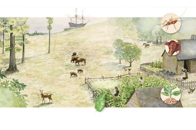 A Depiction of Jamestown after Settlement by Wood Ronsaville Harlin Inc