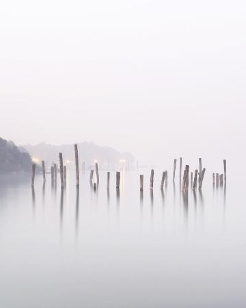wood-stalks-in-water