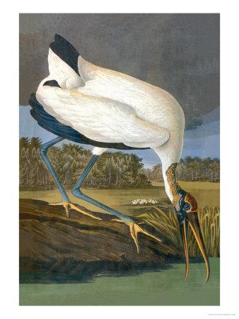 Wood Stork-John James Audubon-Art Print