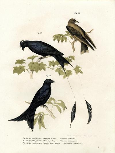 Wood Swallow, 1864--Giclee Print