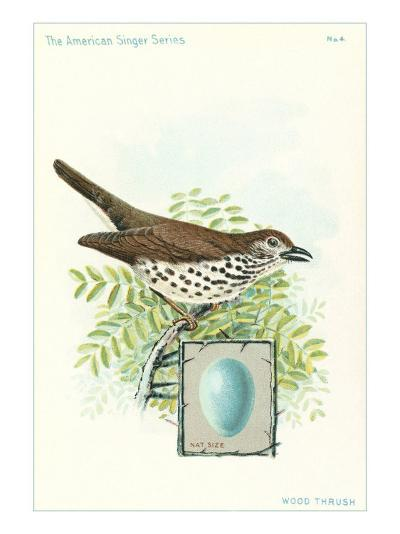 Wood Thrush and Egg--Art Print