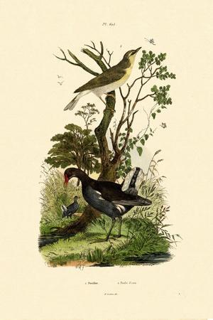 Wood Warbler, 1833-39--Giclee Print