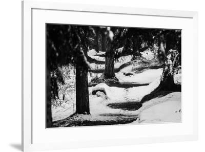 Wood, way, trees-Jule Leibnitz-Framed Photographic Print