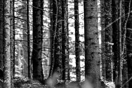 Wood-Jule Leibnitz-Photographic Print
