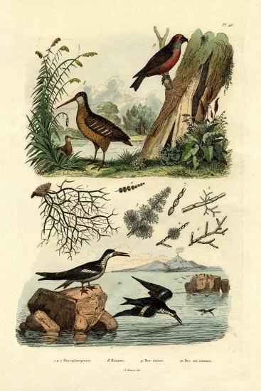 Woodcock, 1833-39--Giclee Print