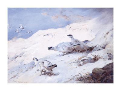 Woodcock in a Snowy Highland-Archibald Thorburn-Premium Giclee Print