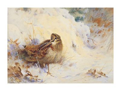 Woodcock in the Snow-Archibald Thorburn-Premium Giclee Print