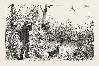 Woodcock Shooting, 1884--Giclee Print