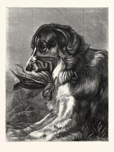 Woodcock-Shooting, Hunt, Hunting, Dog, Bird--Giclee Print