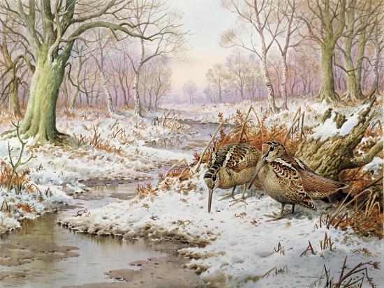Woodcock-Carl Donner-Giclee Print