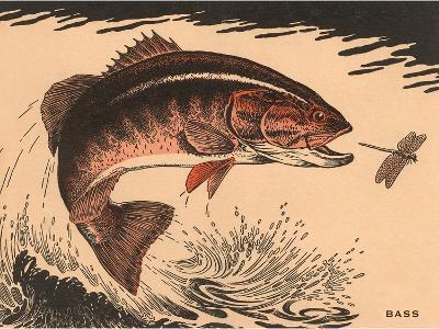 Woodcut of Bass--Art Print