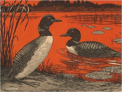 Woodcut of Loons--Art Print