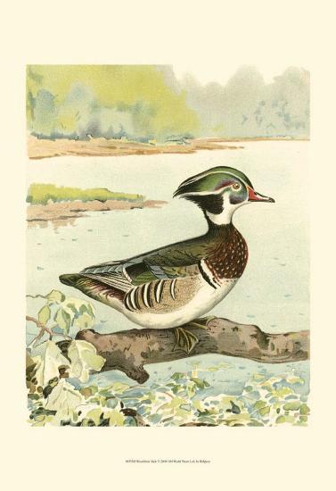 Woodduck Male- Ridgway-Art Print