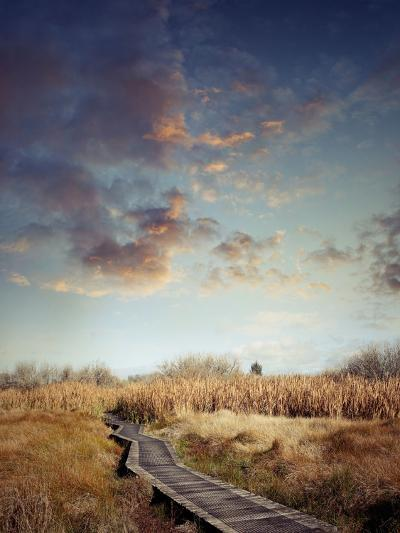 Wooden Boardwalk Leading into Wetland- Supapixx-Photographic Print