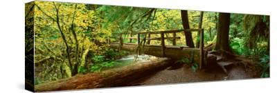 Wooden Bridge in the Hoh Rainforest, Olympic National Park, Washington
