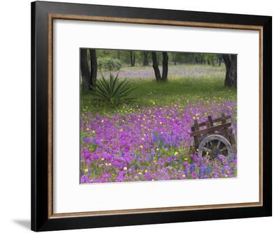 Wooden Cart in Field of Phlox, Blue Bonnets, and Oak Trees, Near Devine, Texas, USA-Darrell Gulin-Framed Photographic Print