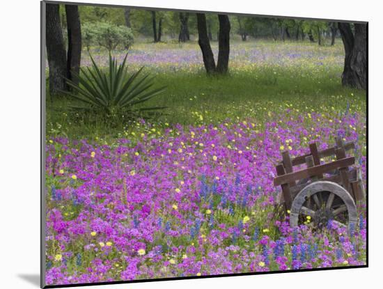 Wooden Cart in Field of Phlox, Blue Bonnets, and Oak Trees, Near Devine, Texas, USA-Darrell Gulin-Mounted Photographic Print