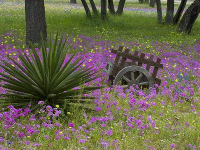 Wooden Cart in Field of Phlox, Blue Bonnets, and Oak Trees, Near Devine, Texas, USA-Darrell Gulin-Photographic Print