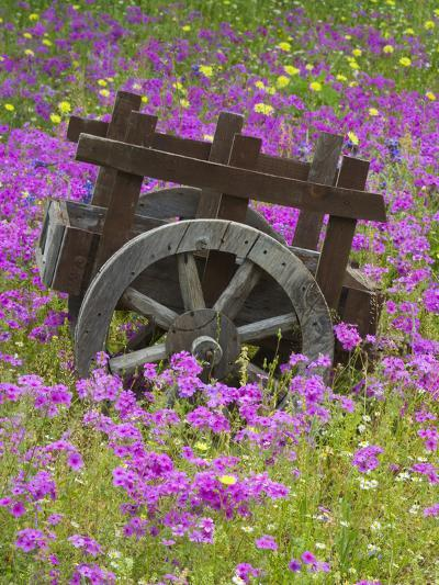 Wooden Cart in Field of Phlox, Blue Bonnets, and Oak Trees, Near Devine, Texas, USA-Darrell Gulin-Photographic Print