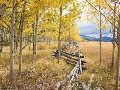 https://imgc.artprintimages.com/img/print/wooden-fence-and-aspen-forest-in-autumn_u-l-pzlbx70.jpg?p=0
