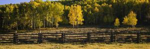 Wooden Fence and Aspen Trees in a Field, Telluride, San Miguel County, Colorado, USA