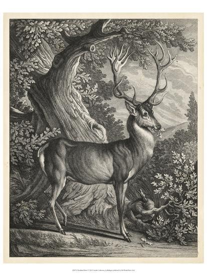 Woodland Deer I-Ridinger-Art Print