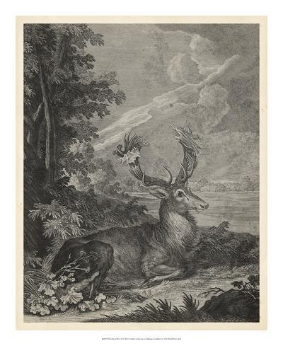 Woodland Deer III-Ridinger-Giclee Print