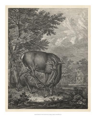 Woodland Deer IV-Ridinger-Giclee Print