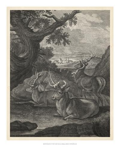 Woodland Deer VI-Ridinger-Giclee Print