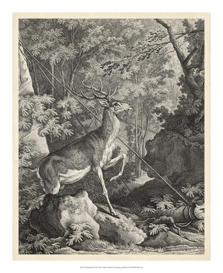 Woodland Deer VII-Ridinger-Giclee Print