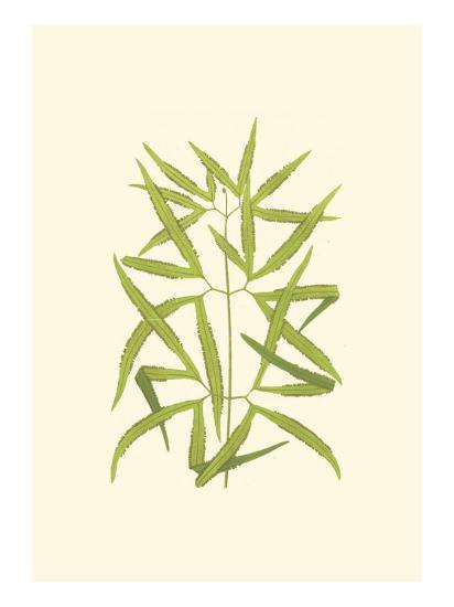 Woodland Ferns I-Edward Lowe-Art Print