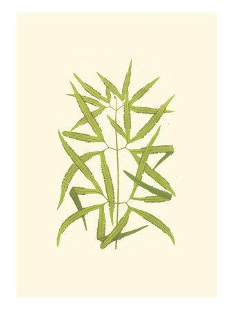 https://imgc.artprintimages.com/img/print/woodland-ferns-i_u-l-q11aett0.jpg?p=0