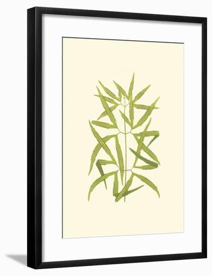 Woodland Ferns I-Edward Lowe-Framed Art Print