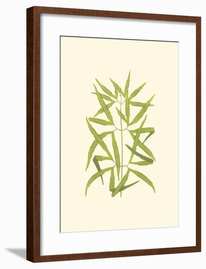Woodland Ferns I-Edward Lowe-Framed Art Print