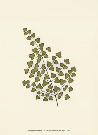 https://imgc.artprintimages.com/img/print/woodland-ferns-ii_u-l-f18gwk0.jpg?p=0