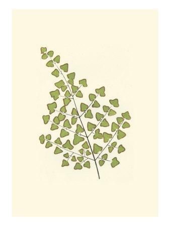 https://imgc.artprintimages.com/img/print/woodland-ferns-ii_u-l-q11aess0.jpg?p=0