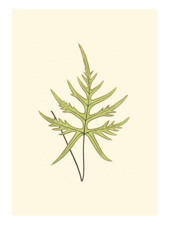 https://imgc.artprintimages.com/img/print/woodland-ferns-iv_u-l-q11aet50.jpg?p=0