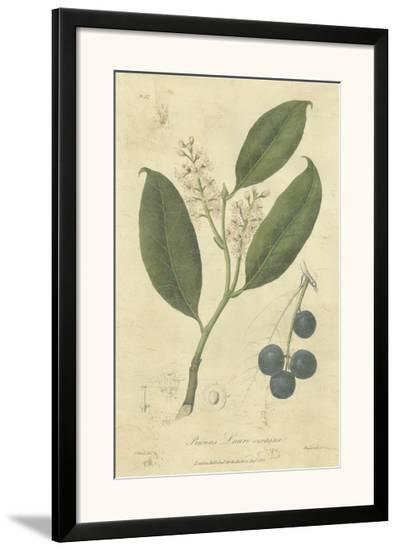 Woodland Foliage II-Weddell-Framed Art Print