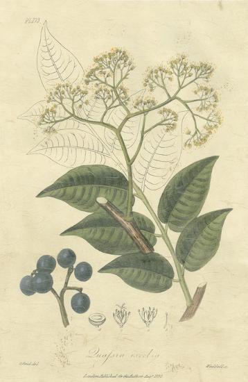 Woodland Foliage IV-Weddell-Giclee Print