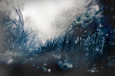 https://imgc.artprintimages.com/img/print/woodland-in-winter-with-flowers_u-l-pz0qd20.jpg?p=0