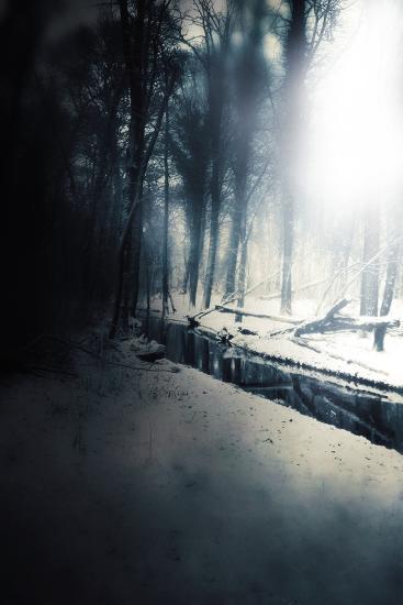 Woodland in Winter-Mia Friedrich-Photographic Print