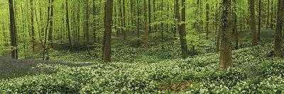 Woodland Melody-Wild Wonders of Europe-Giclee Print