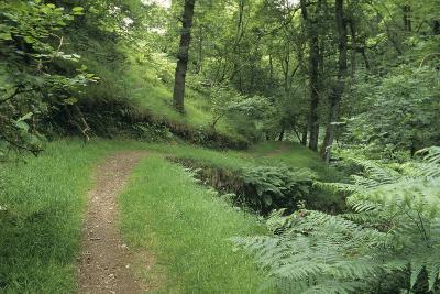 Woodland Path-David Aubrey-Photographic Print