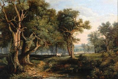 Woodland Scene-James Stark-Giclee Print
