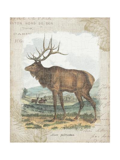 Woodland Stag II-Hugo Wild-Art Print