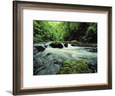 Woodland Stream and Rapids, Time Exposure-Norbert Rosing-Framed Photographic Print