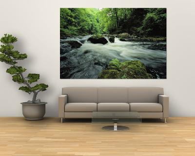 Woodland Stream and Rapids, Time Exposure-Norbert Rosing-Giant Art Print